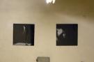 Výstavy